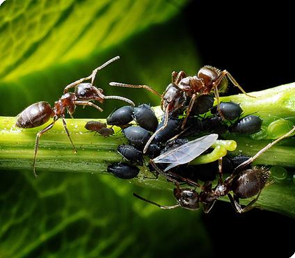 mierenbestrijding